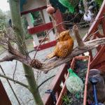 Knödelhalter mit Vogel